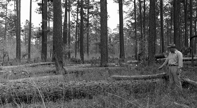 Circa Forest Management-Various Longleaf Scenes in Polk County, Photo 11