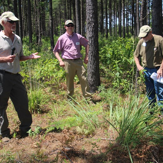 Ike McWhorter Dicussing Eastern Gammagrass in Loblolly Plantation