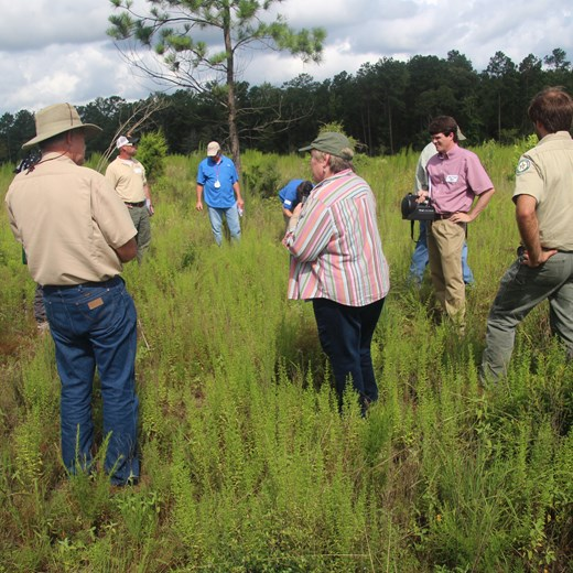 Participants Evaluating Band Spray to Release Longleaf Seedlings