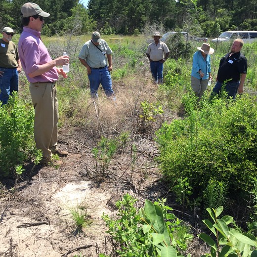 Wes Pruet, RMS Forester, Discussing Use of Prescribed Fire and Herbicides to Control Yaupon in New Stands of Longleaf Pine