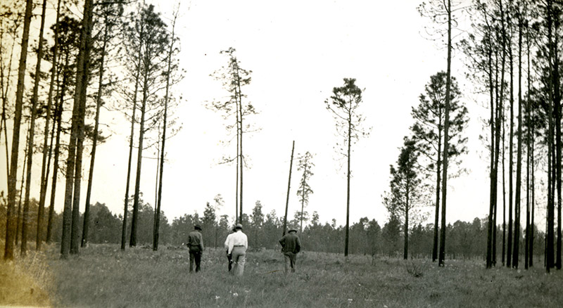 Longleaf in 1939 on the Angelina National Forest, Photo 4