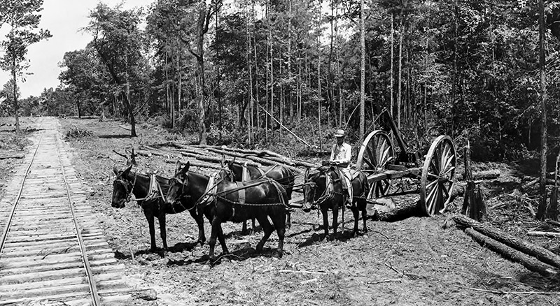 Forest Industries and Products-Mule Team Logging-W.T. Carter Holdings, Photo 7