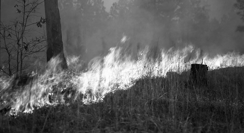 Forest Fire Protection-Widlfire in Longleaf Near Hillister, Photo 9