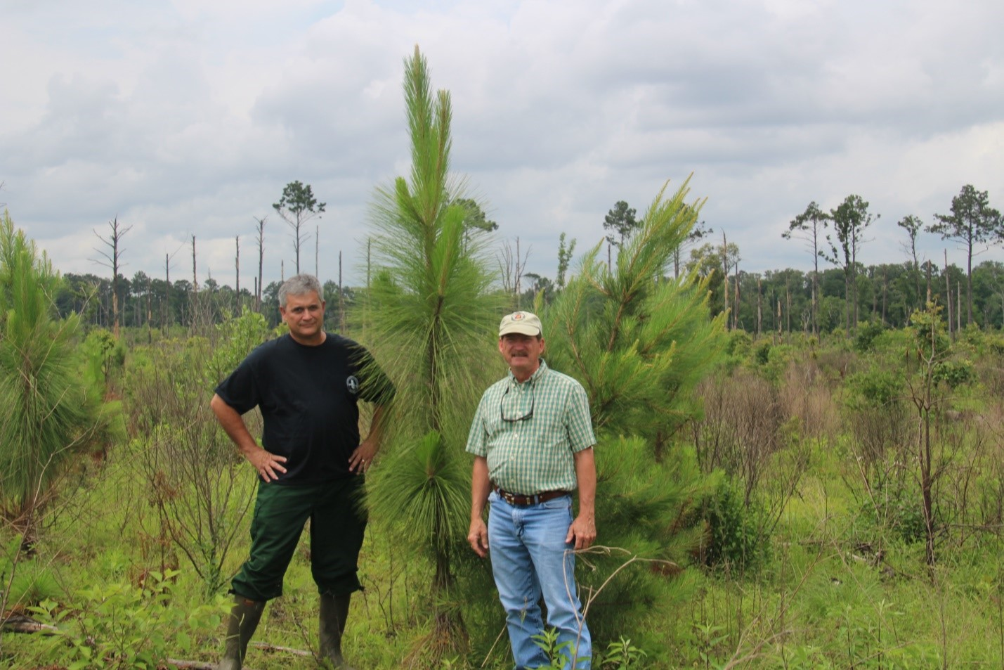 Replanted Longleaf in National Forest, Kerry Hogg, USFS, and Kent Evans, USFS retired